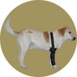 Бандаж для собак на передние лапы