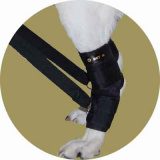 Бандаж-тренинг для задних лап для собак
