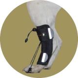 Фиксатор-стабилизатор для задних лап для собак
