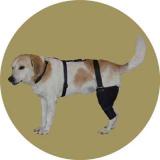 Бандаж коленного сустава для собаки