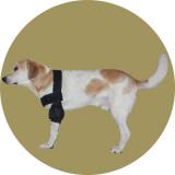 Плечевой бандаж для собак