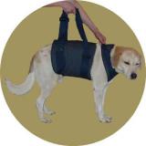 Ортез локтевого сустава для собак thumbnail